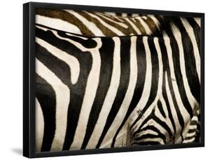 A Pattern of Stripes on a Burchell's Zebra.  Kenya. by Karine Aigner