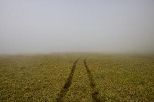 A Single Set of Tire Tracks Leads Through the Grass into the Mist and Fog by Karine Aigner