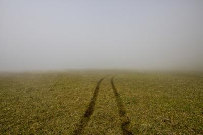 A Single Set of Tire Tracks Leads Through the Grass into the Mist and Fog