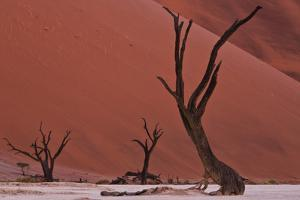 Muted Rust Colored Dunes, Silhouettes Of Dead Acacia Trees Of Deadvlei Pan, Abstract Landscapes by Karine Aigner