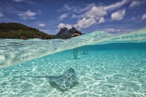 Under Over Underwater Shot Of A Stingray On White Sand, With Tourists Legs In The Bkgd Bora Bora by Karine Aigner