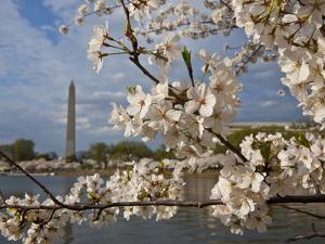 Washington, Dc by Karine Aigner
