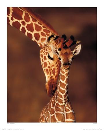 Giraffe by Karl Amman