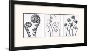 Art Forms in Nature I by Karl Blossfeldt