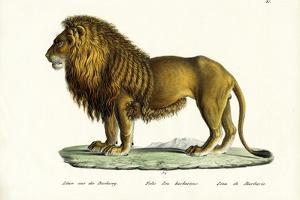 Barbary Lion, 1824 by Karl Joseph Brodtmann