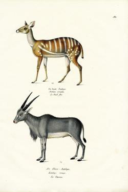 Bushbuck, 1824 by Karl Joseph Brodtmann