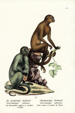 Capuchin, 1824 by Karl Joseph Brodtmann