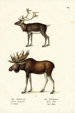 Caribou, 1824 by Karl Joseph Brodtmann