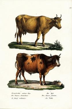 Cattle, 1824 by Karl Joseph Brodtmann