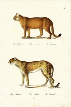 Cougar, 1824 by Karl Joseph Brodtmann