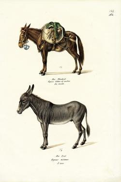 Donkey, 1824 by Karl Joseph Brodtmann