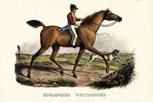 English Racer Horse, 1824 by Karl Joseph Brodtmann