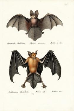 Hollow-Faced Bat, 1824 by Karl Joseph Brodtmann