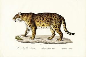 Jaguar, 1824 by Karl Joseph Brodtmann