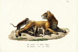 Lioness with Cubs, 1824 by Karl Joseph Brodtmann