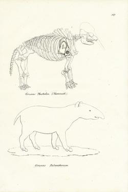 Mastodon, 1824 by Karl Joseph Brodtmann