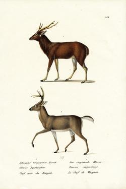 Red Deer, 1824 by Karl Joseph Brodtmann