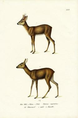 Roe Deer, 1824 by Karl Joseph Brodtmann