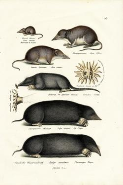 Shrews, 1824 by Karl Joseph Brodtmann