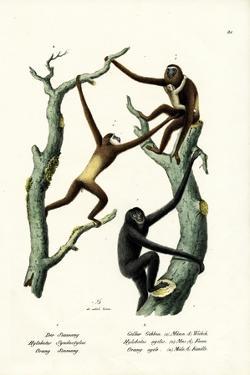 Siamang, 1824 by Karl Joseph Brodtmann