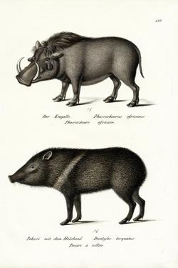 Warthog, 1824 by Karl Joseph Brodtmann