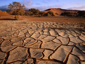 Cracked Mud, Dunes and Camel Thorn Trees Near Sossusvlei by Karl Lehmann