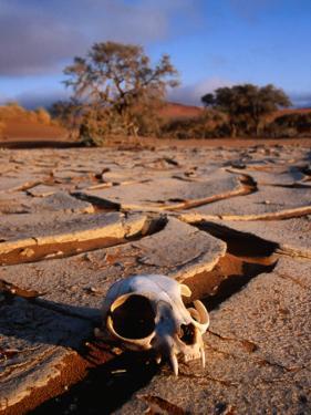Cracked Mud, Dunes and Monkey Skull in Namib Desert Near Sossusvlei by Karl Lehmann