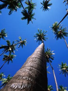 Kapuaiwa Coconut Grove, Kaunakakai, Molokai, Hawaii, USA by Karl Lehmann