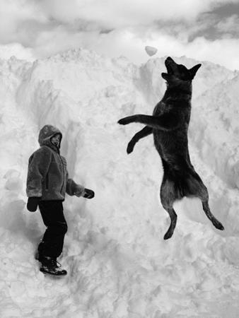 Dog Catching a Snowball
