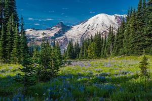 Summer on Mount Rainier by KarlsJohnson.com