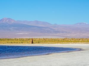 Laguna Baltinache, Salar de Atacama, Antofagasta Region, Chile, South America by Karol Kozlowski