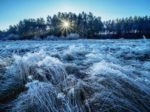 Morning frost in Gorajec, Lublin Voivodeship, Poland by Karol Kozlowski