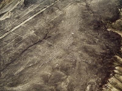 The Humming Bird Geoglyph, aerial view, Nazca, UNESCO World Heritage Site, Ica Region, Peru, South  by Karol Kozlowski