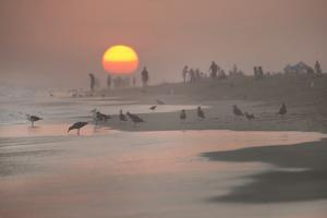 Endless Summer II by Karyn Millet
