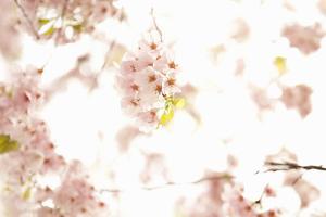 In Bloom XVII by Karyn Millet