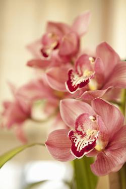 Pink Orchid I by Karyn Millet