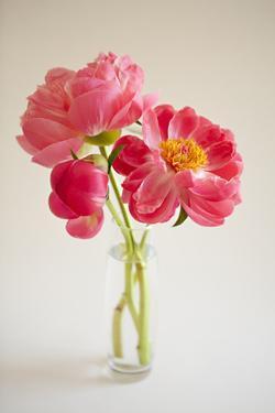 Pink Peonies in Vase II by Karyn Millet