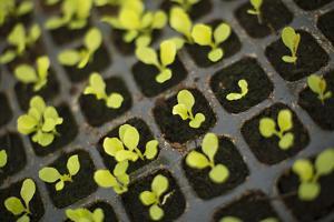 Seedlings by Karyn Millet