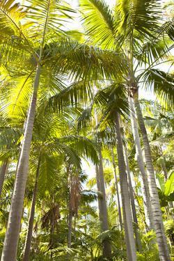 Tropical Oasis I by Karyn Millet