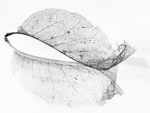 The Old Leaf by Katarina Holmström