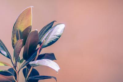 Tropical House Plant on a Warm Red Orange Background by KatDmnt