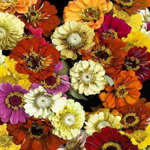 Floral Abundance I by Kate Bennett