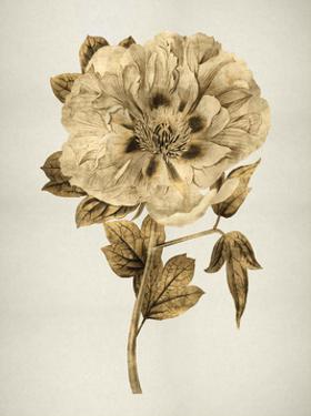 Gold Tulip I by Kate Bennett