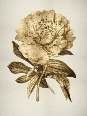 Gold Tulip II by Kate Bennett