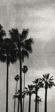 Palm Silhouette on Silver I by Kate Bennett