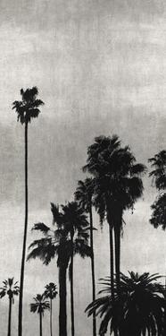 Palm Silhouette on Silver II by Kate Bennett