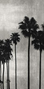 Palm Silhouette on Silver III by Kate Bennett