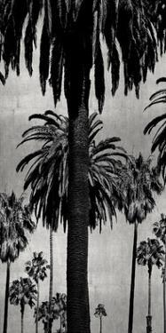 Palms with Silver I by Kate Bennett