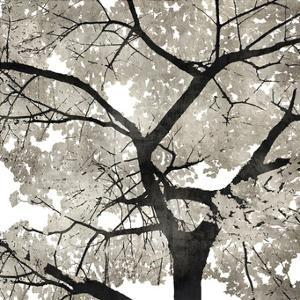 Silver Leaves by Kate Bennett