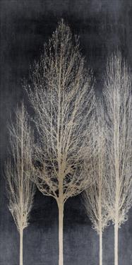 Silver Tree Silhoutte II by Kate Bennett